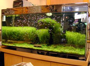 ㄚ宏早期的水草缸